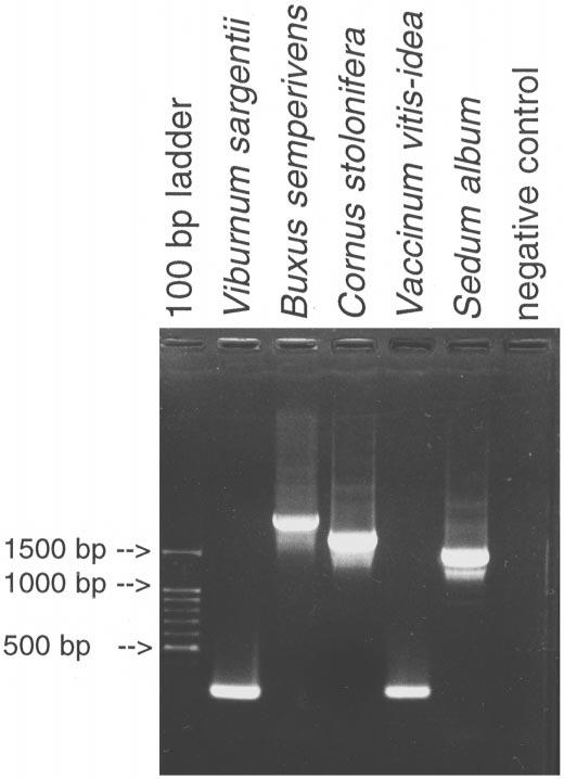 JOLY ET AL. LOSSES OF coxii.i3 INTRON 361 Fig. 1 PCR-amplified coxii gene for five species in 1.5% agarose gel treated with ethidium bromide. When the coxii.