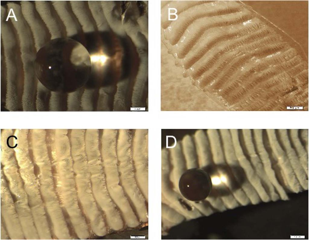 Figure 3 Optical images of water droplets on the shed surfaces. Droplets of water on B-S (A), P-S (B), M-S (C), and F-S (D) (scale bar for images: 500 mm). The water wets both P-S and M-S samples.
