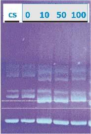 Studies of radiation stability of DNA x-ray beam Plasmid: extrachromosomal dry form DNA pbs 189 Electrophoretical analysis of a of a dissolved sample First ever DNA radiation stability tests in the