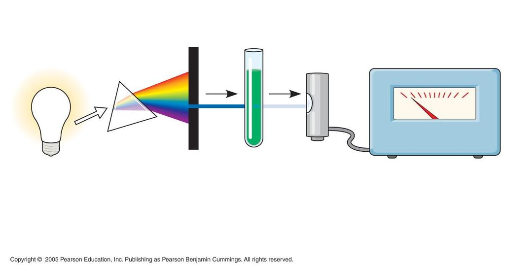 White light Refracting prism Chlorophyll solution Photoelectric tube 0 100 Slit moves to pass light of selected