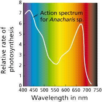 PROPERTIES OF LIGHT: form of electromagnetic energy (radiation) light behaves like a wave; Wavelength