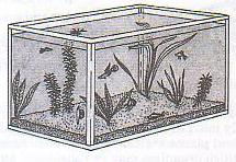 11. All of the organisms that live in a pond make up a. a habitat. b. a community. c. the environment. d. an ecosystem.