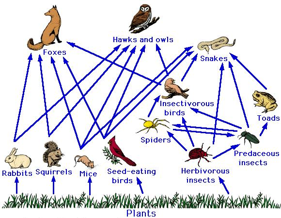 Use the food web above to answer the following questions. What are producers? List examples from the food web. What are herbivores? List examples from the food web. What are carnivores?