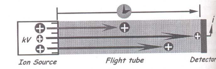 Time-of-Flight Analyzer (TOF) Ion velocity is mass dependent.
