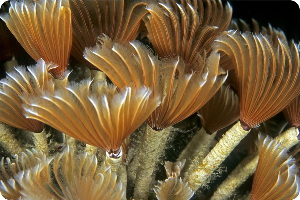 Tubeworms deep in the Gulf of Mexico get their energy from chemosynthetic bacteria. The bacteria actually live inside the worms. Lesson Summary Most autotrophs make food using photosynthesis.