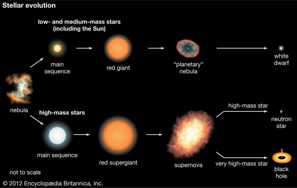 Massive Stars Massive stars are also luminous stars.