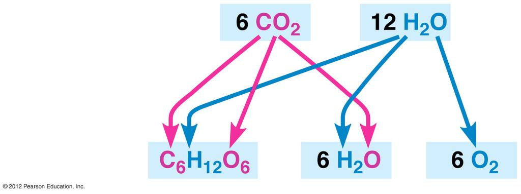 Figure 7.3B Reactants: roducts: 7.4 hotosynthesis is a redox process, as is cellular respiration hotosynthesis, like respiration, is a redox (oxidation-reduction) process.