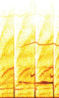 Washboard modes as ELM-related events in JET 129 Pulse No. 53062 Magnetics spectrogram (a.u.) 80 ELM ELM ELM 1.4 Pulse No. 53062: Electron Temperature (kev) -2.5 60 WB 1.2 WB -3.0 1.