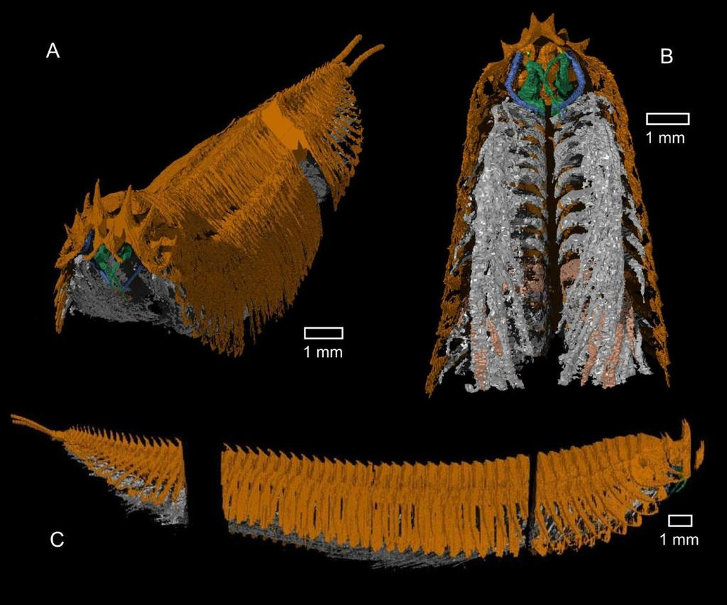 Taxon sampling (stem- and non-arthropods) Fig. 4.10 A virtual reconstruction of the holotype (OUMNH C. 29601) of Tanazios dokeron Siveter et al.