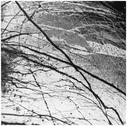 flows are virtually pure water ice Europa s density is relatively high 85% to 90% of Europa s mass must be rocky material Basic processes Tidal heating by Jupiter, Io & Ganymede Only ~ 25% as much as