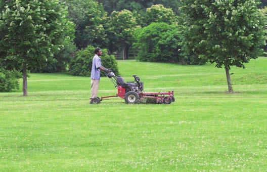 Regular mowing will significantly reduce the number of flowers and reduce pollinator foraging.