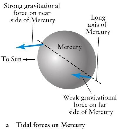 Strong tidal effects, Mercury s slightly elongated shape and its very eccentric orbit