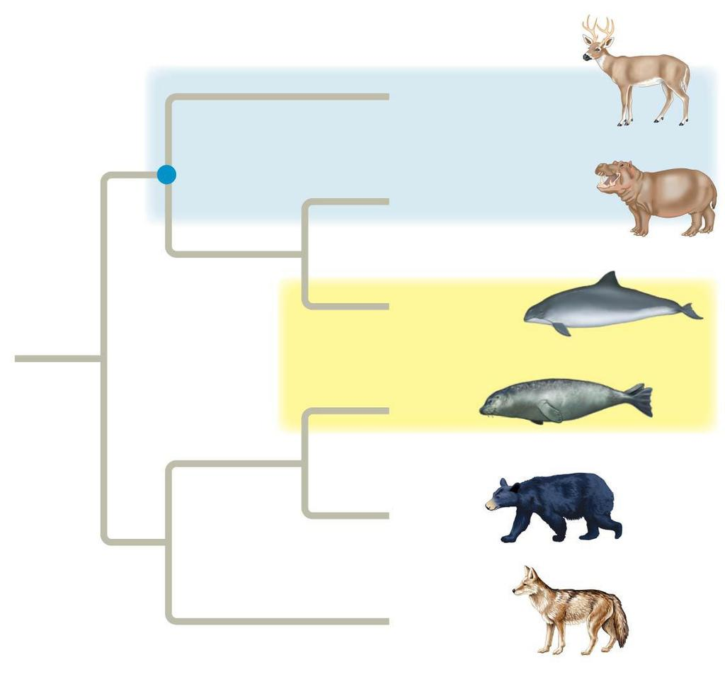 PARAPHYLETIC group consists of a single common ancestor and some (not all) of its descendants (b)