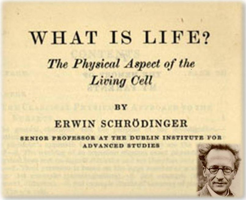 "Schrödinger in 1944, after developing Quantum Mechanics: ""The large and important and very much discussed question is: How can the"