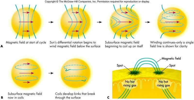 patterns on Earth may also follow the solar cycle 44 Differential Rotation Cause of the Solar Cycle This rotation causes the Sun s magnetic field to wind up The cycle ends