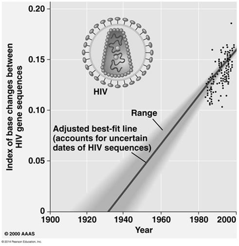 The Origin of HIV: Applying a Molecular Clock Phylogenetic analysis shows that HIV is descended from viruses that infect chimpanzees and other primates A comparison of HIV samples from throughout the