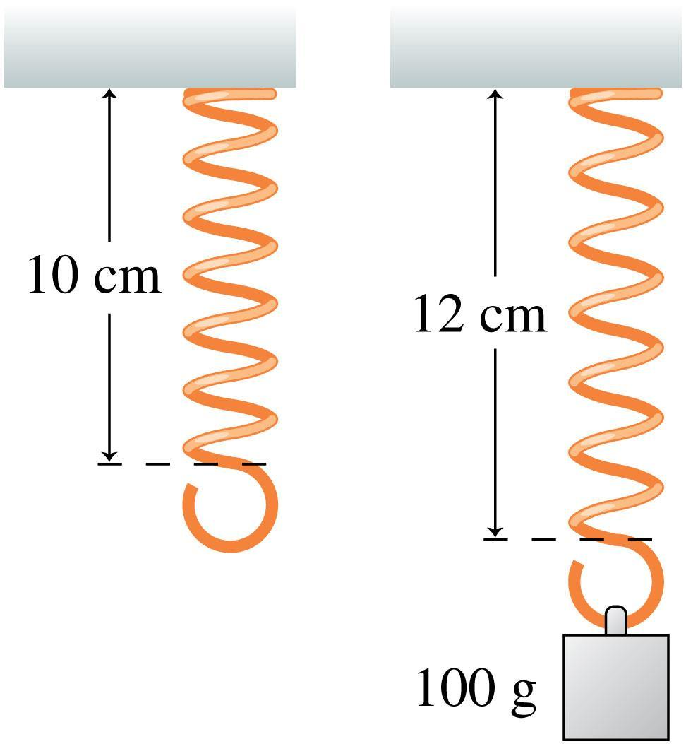 Chapter 14 Preview Stop to Think A hanging spring has length 10 cm. A 100 g mass is hung from the spring, stretching it to 12 cm.