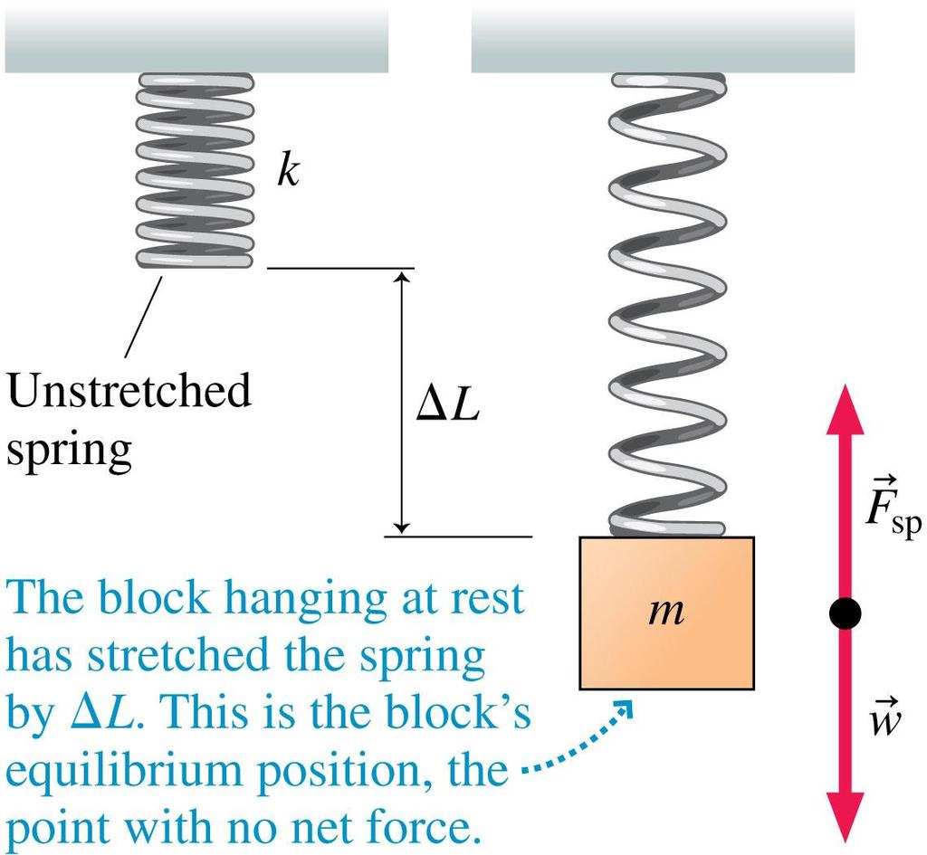 Vertical Mass on a Spring For a hanging weight, the equilibrium position of