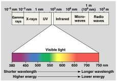 A Look at Light The spectrum of color Light: absorption spectra Photosynthesis gets energy by absorbing wavelengths of