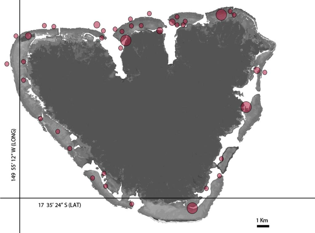 Location of all Amphiprion chrysopterus collected