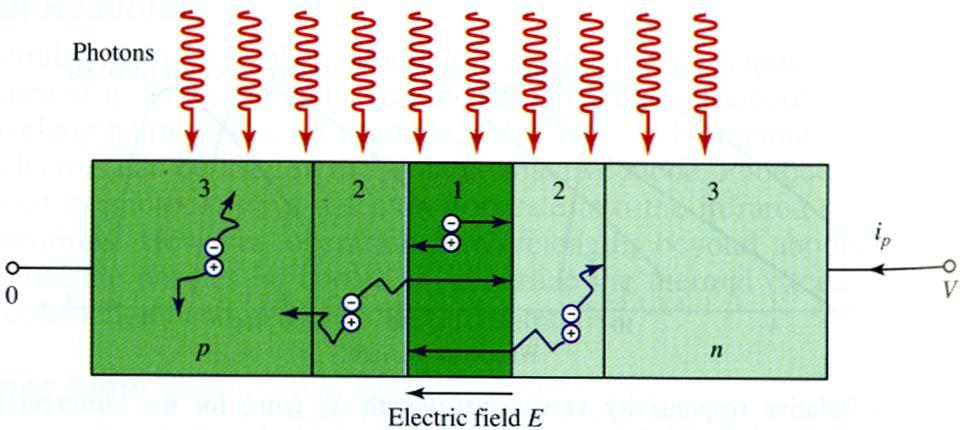 p-n photodetector Photons are absorbed and e-h are generated everywhere, but only e-h in presence of E field is transported. A p-n junction supports an E field in the depletion layer.