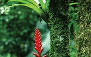 Commensalism: Bromiliad Roots on Tree Trunk Without Harming Tree Most Populations Live Together in