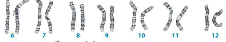 The mitotic chromosome is the most condensed form of DNA and it is ONLY found At mitosis or meiosis.