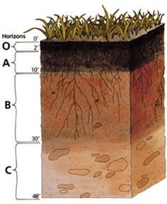 Unit 1, Lesson 4 Nutrient Movement Towards and Into Plant Roots