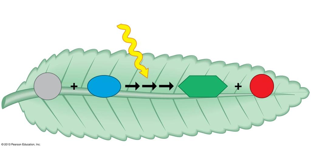 outer membranes In the overall equation for photosynthesis, notice that the reactants of