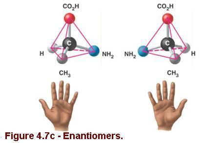 Carbon The Backbone of Biological Molecules: ISOMERS Enantiomers are molecules that are mirror images of each other (like left and right hands).