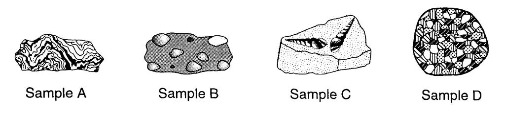 37. The diagram below shows four rock samples. Which sample best shows the physical properties normally associated with regional metamorphism? A) A B) B C) C D) D 38.