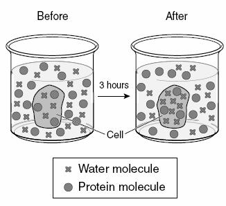 .. A cell in a hypotonic solution will... A cell in a isotonic solution will... a. In the picture to the right, are the water molecules moving into or out of the cell? b.