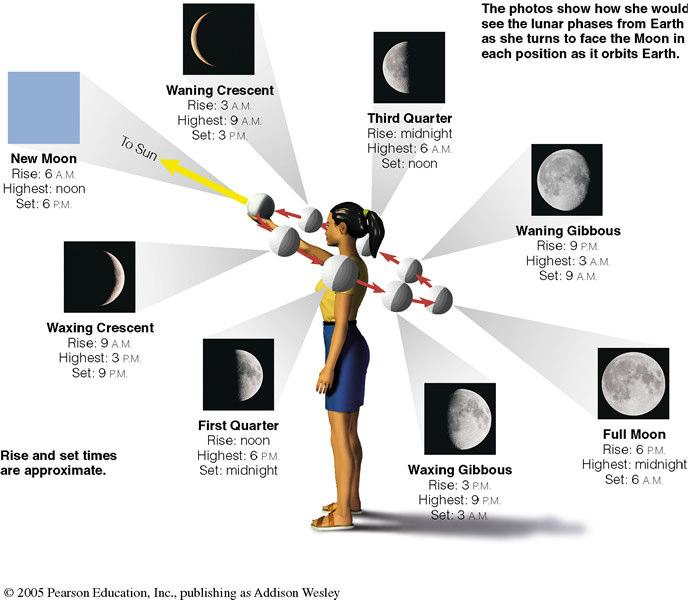 Phases of Moon Phases of the Moon Half of Moon is illuminated by Sun