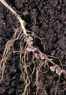 microbes near root trade carbohydrate