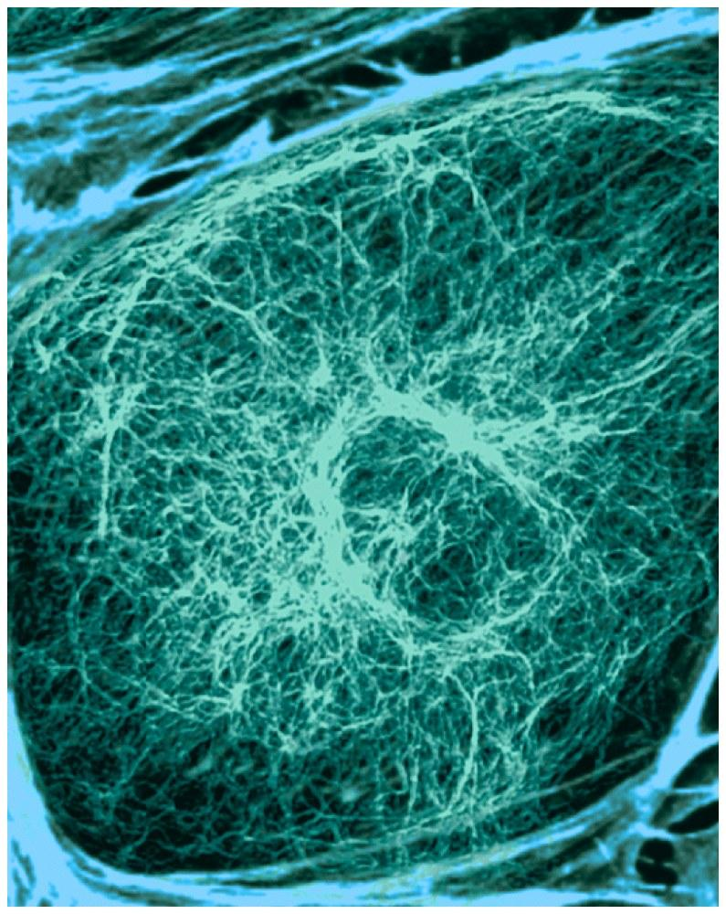 3.14 Cytoplasm and cytoskeleton: the cell s