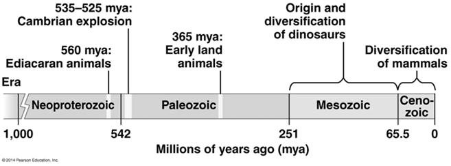 Animal Phylogeny The animal kingdom includes not only great diversity of living species but the even greater diversity of extinct ones as well The common ancestor of living animals may have