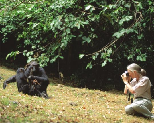Figure 1.18 Jane Goodall collecting qualitative data on chimpanzee behavior. Goodall recorded her observations in field notebooks, often with sketches of the animals behavior. (Figure 1.18).