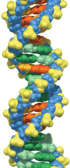 For instance, a given bacterial gene may specify a particular protein (an enzyme) required to assemble the cell membrane, while a certain human gene may denote a different protein (an antibody) that