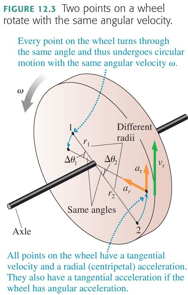 Rotational Motion The figure shows a wheel rotating on an axle.