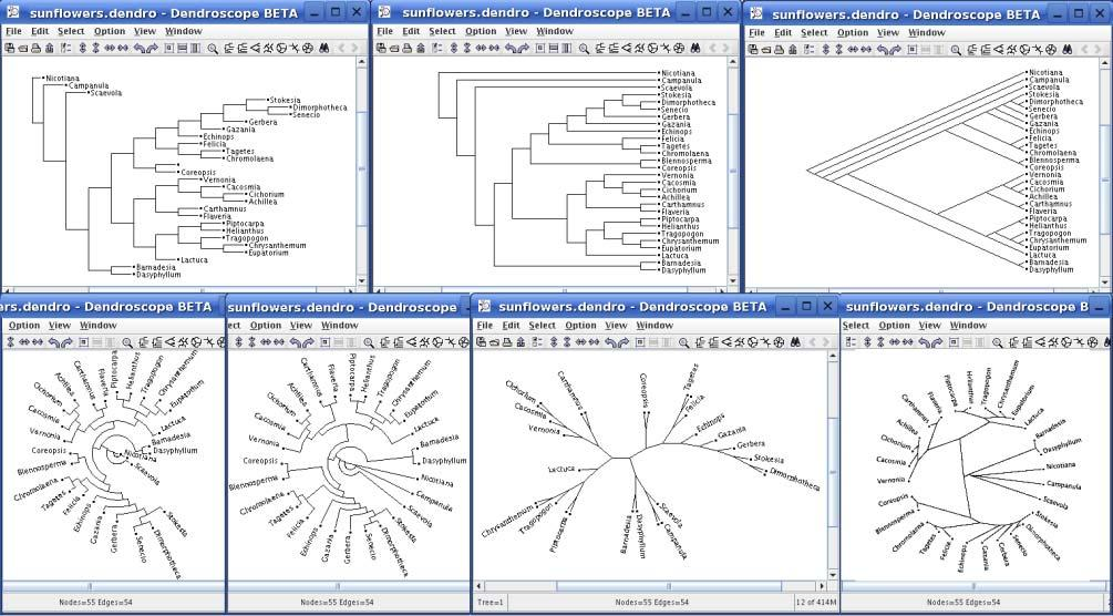 Phylogenetic trees can be drawn many ways Clade: group with a single