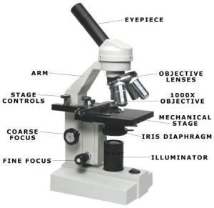 Function of the Compound Light Microscope 13.