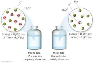 For any Acid: HA + H 2 O H 3 O + (aq) + A (aq) Acid + Water Hydronium + Acid anion The hydrogen of the acid is essentially a single proton that can bond through a coordination