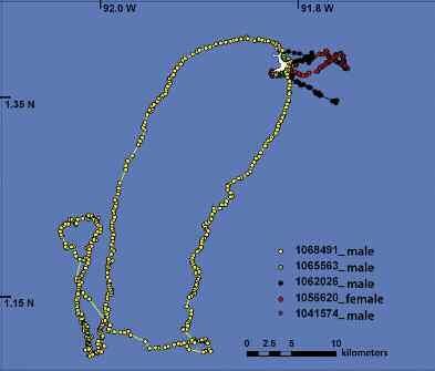 Figure 4. Navigation routes of hammerhead sharks followed continuously for 48 to 72 hours around Wolf Island. (Source: Ketchum et al., in prep.).