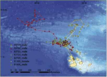 Figure 6. Navigation routes of seven hammerhead sharks tagged with satellite devices in Darwin and Wolf Islands from November 2007 to May 2009. Source: Ketchum et al., in prep).