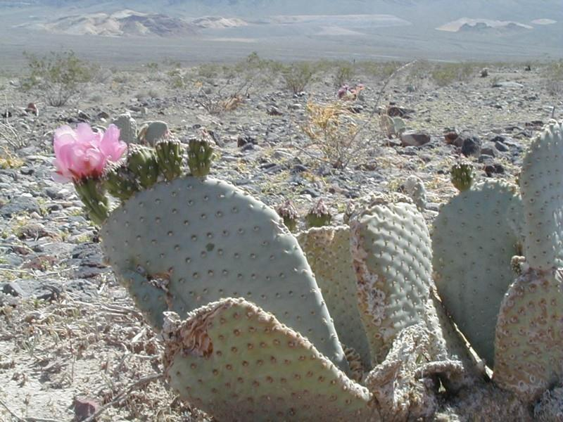 Desert Plants Flowers