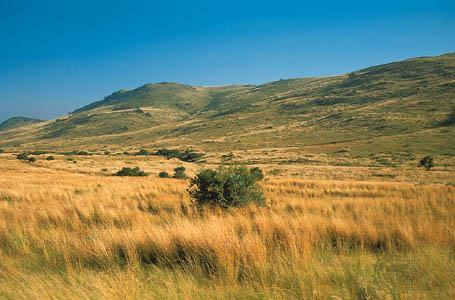 Grassland Climate Hot, dry summers and