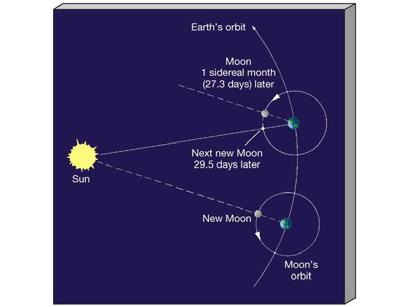 The Moon The sidereal period of the lunar orbit is 27.3 Earth days This is one sidereal month, measured relative to the stars The synodic period of the Moon s orbit is 29.