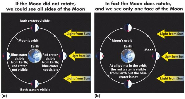The Moon is in 1:1 synchronous rotation with the Earth it