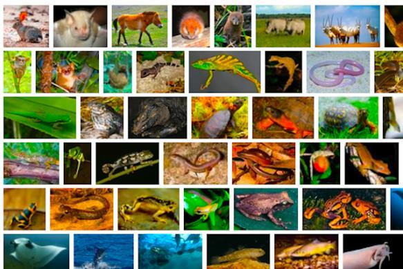 There are about 1,500,000 species of animal