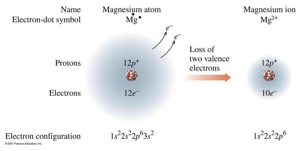 Formation of Mg 2+ Magnesium achieves an